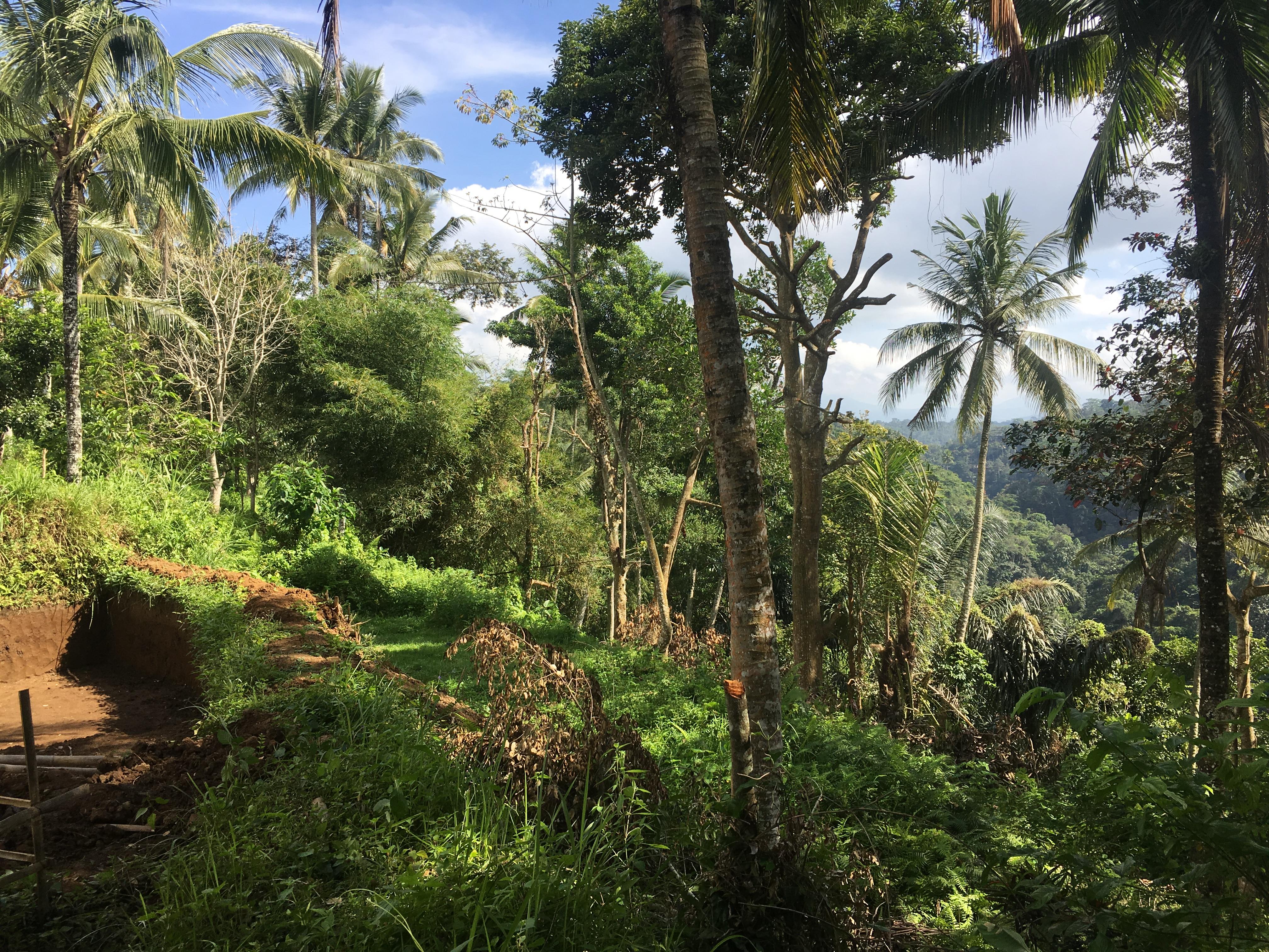 Tanah Dijual Murah Di Teras Ayung Ubud Dengan View Sungai Alami