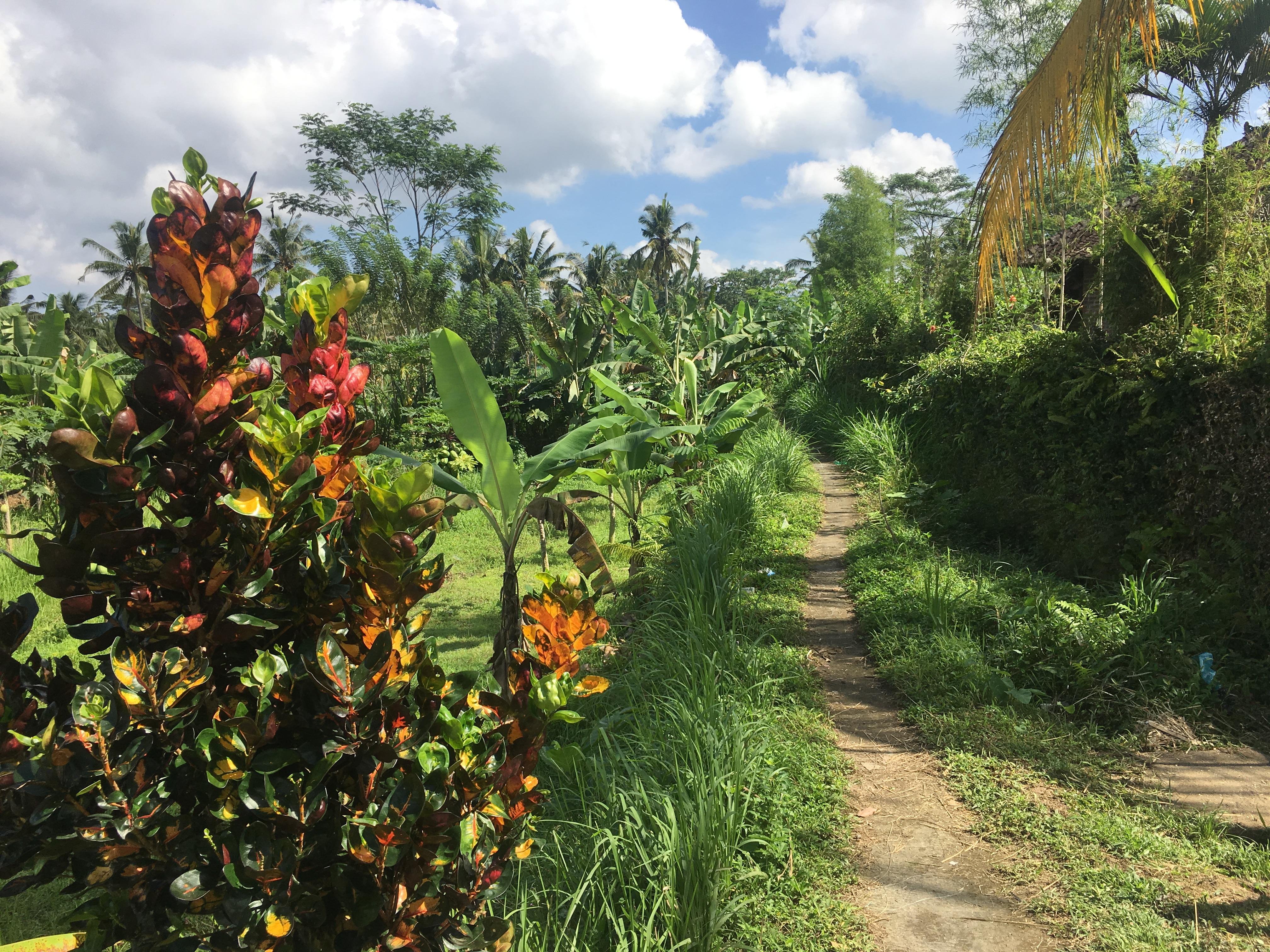 Tanah Cantik Di Teras Ayung Utara Ubud Dijual Cepat Harga Murah