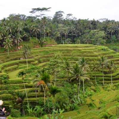 Ubud Village - Natural & Beautiful