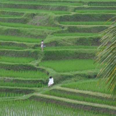 Tanah dijual di Ubud TJUB176
