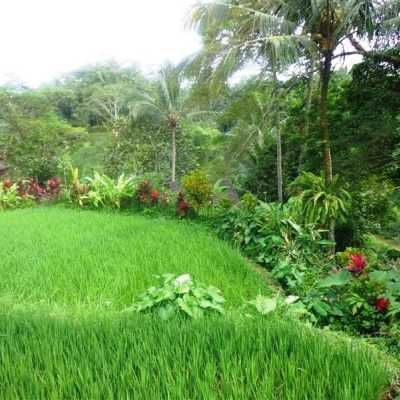 Tanah dijual di Ubud TJUB194